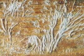 insectes à larves xylophages _ parasites su bois Ref-etat-parasitaire_clip_image076